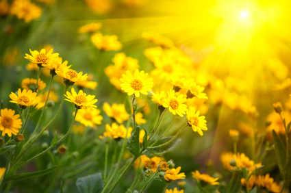 Terapeuta de Floral Joel Aleixo
