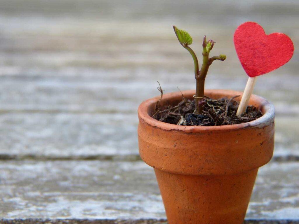 vaso-com-planta-nascendo-e-um-coracao