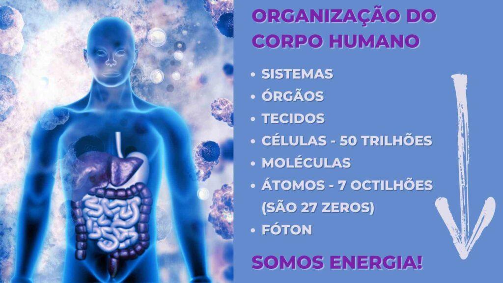 organização-corpo-humano